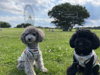 犬 芝生の写真・画像素材[4477937]