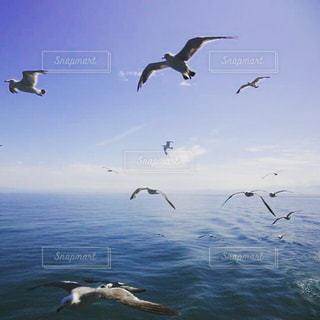 海の写真・画像素材[196305]