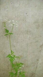白い小花の写真・画像素材[4556781]