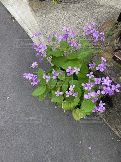 植物の上の紫色の花の写真・画像素材[4481254]
