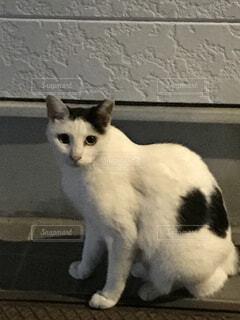建物の上に座ってる猫の写真・画像素材[4506346]