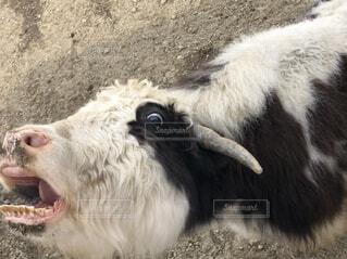 面白い動物の写真・画像素材[4481661]