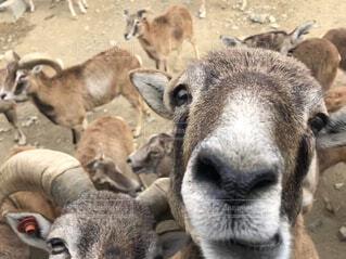 おもしろ動物の写真・画像素材[4481730]