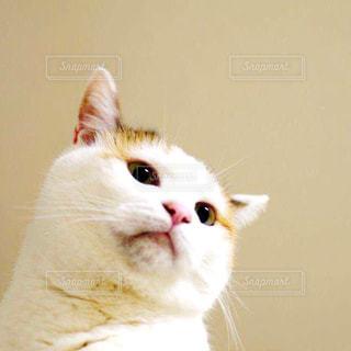 猫の写真・画像素材[196394]