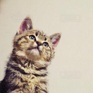猫の写真・画像素材[196395]