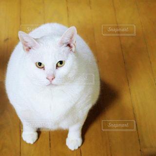 猫の写真・画像素材[198166]