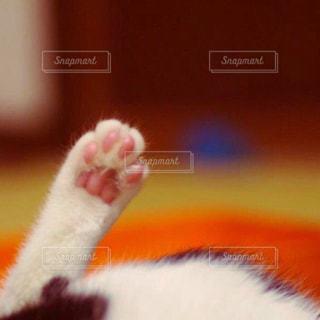 猫の写真・画像素材[198198]