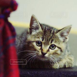 猫の写真・画像素材[198200]