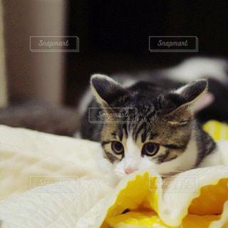 猫の写真・画像素材[198201]