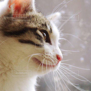 猫の写真・画像素材[198328]