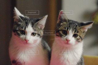 猫の写真・画像素材[198332]