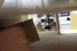 猫の写真・画像素材[199603]