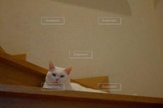 猫の写真・画像素材[204952]