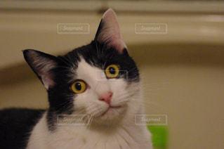 猫の写真・画像素材[209246]