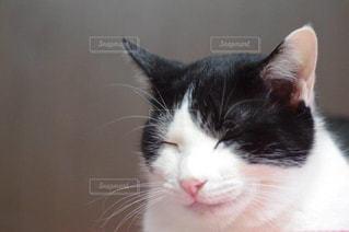 猫の写真・画像素材[210338]