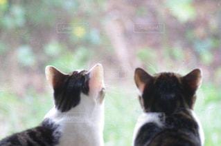 猫の写真・画像素材[246569]