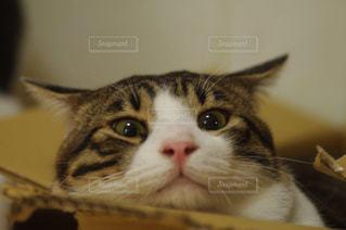猫の写真・画像素材[246570]