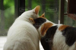 猫の写真・画像素材[250263]