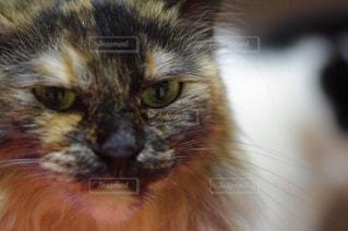 猫の写真・画像素材[250267]