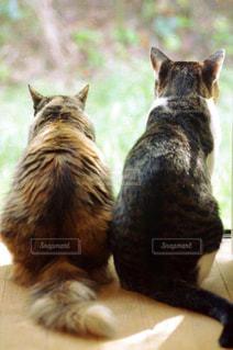 猫の写真・画像素材[251789]