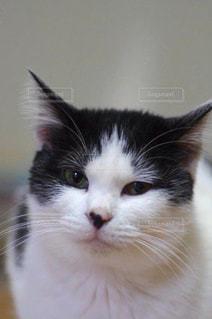 猫 - No.327981