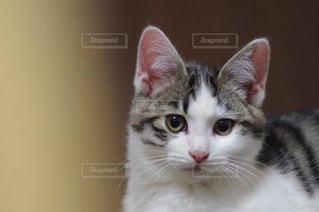 猫の写真・画像素材[327985]
