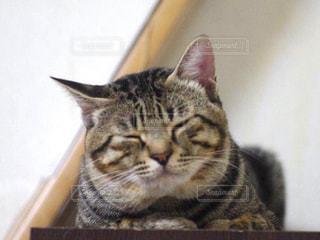 猫の写真・画像素材[327986]