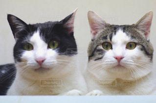 猫の写真・画像素材[429772]