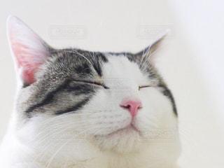 猫 - No.429787