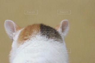 綺麗な後頭部 - No.533710
