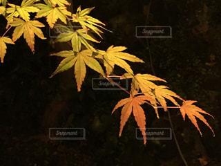 自然の写真・画像素材[274477]
