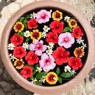 花の写真・画像素材[262973]