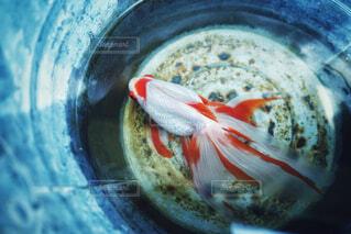 水のボウルのクローズアップの写真・画像素材[4511024]