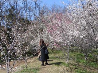 木の隣に立っている人の写真・画像素材[4506169]