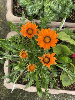 花のクローズアップの写真・画像素材[4549726]