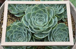 飛び出す植物の写真・画像素材[4549730]