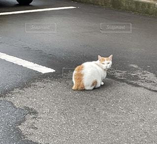 路上の猫の写真・画像素材[4633013]
