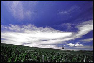 自然の写真・画像素材[198119]