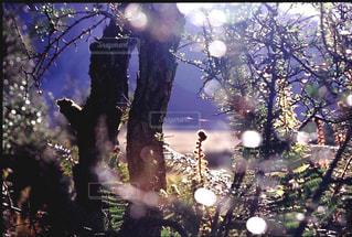 森林の写真・画像素材[199494]