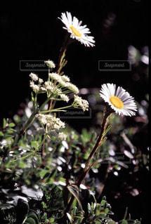 花の写真・画像素材[199497]