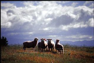 羊の写真・画像素材[199500]