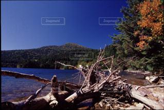自然の写真・画像素材[199520]