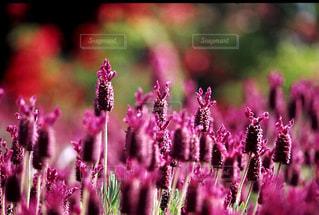 花の写真・画像素材[199524]