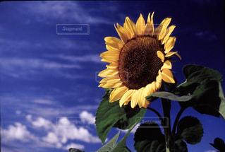 自然の写真・画像素材[199527]