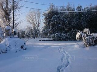大雪の朝の写真・画像素材[4532061]