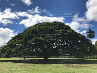 この木なんの木?の写真・画像素材[999290]