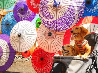 和傘と愛犬達の写真・画像素材[4495120]