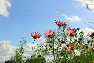透き通る花びらの写真・画像素材[4487114]