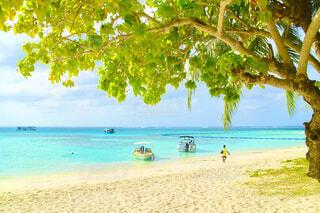 水の体の近くのビーチにあるヤシの木のグループの写真・画像素材[4514153]