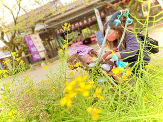 菜の花と微笑ましい親子の写真・画像素材[4534116]